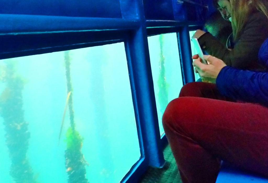 Sala de visión submarina del Catamarán Acuarium Cat