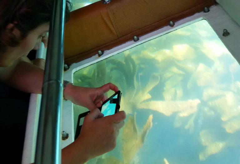 Fondos marinos vistos desde el catamarán